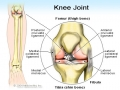 knee_joint